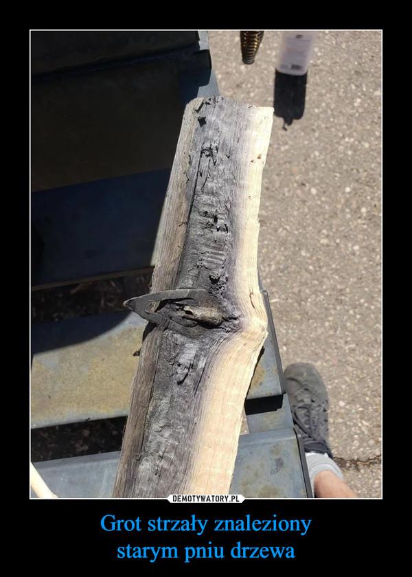 Grot strzały znalezionystarym pniu drzewa –
