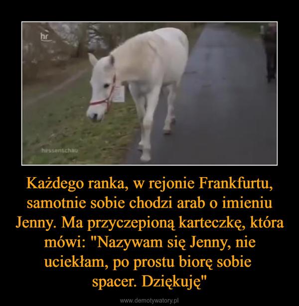 """Każdego ranka, w rejonie Frankfurtu, samotnie sobie chodzi arab o imieniu Jenny. Ma przyczepioną karteczkę, która mówi: """"Nazywam się Jenny, nie uciekłam, po prostu biorę sobie spacer. Dziękuję"""" –"""