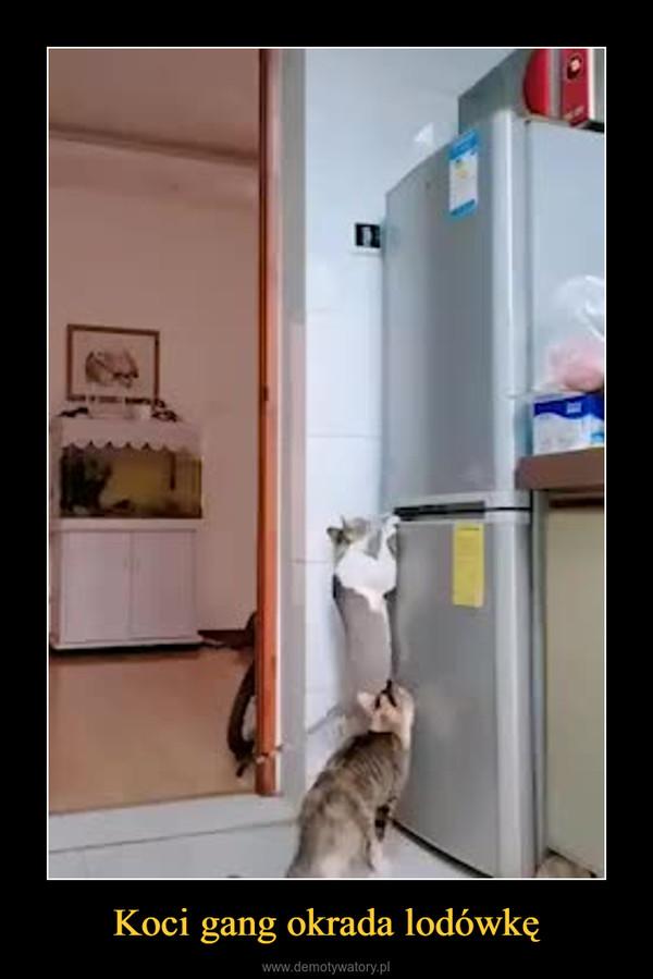 Koci gang okrada lodówkę –