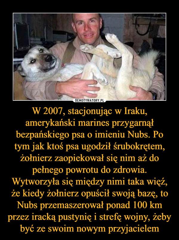 W 2007, stacjonując w Iraku, amerykański marines przygarnął bezpańskiego psa o imieniu Nubs. Po tym jak ktoś psa ugodził śrubokrętem, żołnierz zaopiekował się nim aż do pełnego powrotu do zdrowia. Wytworzyła się między nimi taka więź, że kiedy żołnierz opuścił swoją bazę, to Nubs przemaszerował ponad 100 km przez iracką pustynię i strefę wojny, żeby być ze swoim nowym przyjacielem –