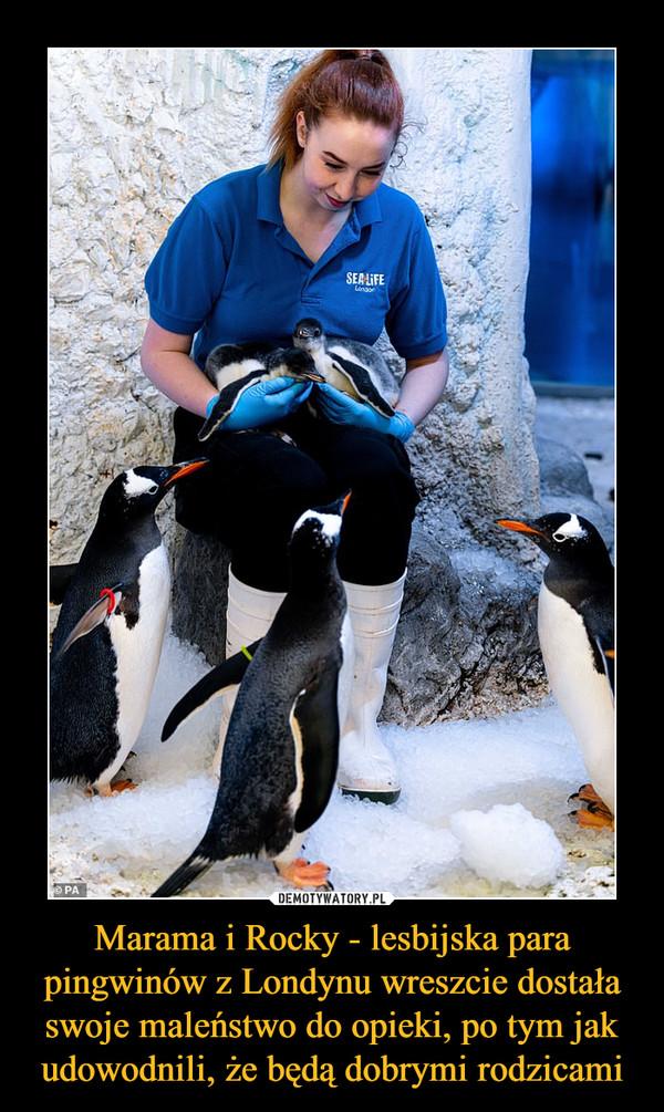 Marama i Rocky - lesbijska para pingwinów z Londynu wreszcie dostała swoje maleństwo do opieki, po tym jak udowodnili, że będą dobrymi rodzicami –