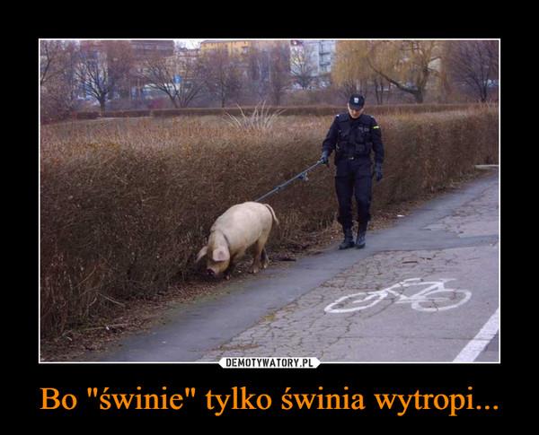 """Bo """"świnie"""" tylko świnia wytropi... –"""
