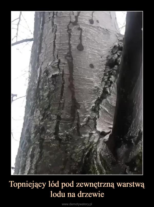 Topniejący lód pod zewnętrzną warstwą lodu na drzewie –