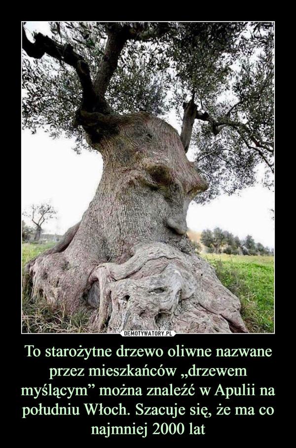 """To starożytne drzewo oliwne nazwane przez mieszkańców """"drzewem myślącym"""" można znaleźć w Apulii na południu Włoch. Szacuje się, że ma co najmniej 2000 lat –"""