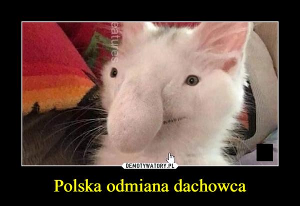 Polska odmiana dachowca –