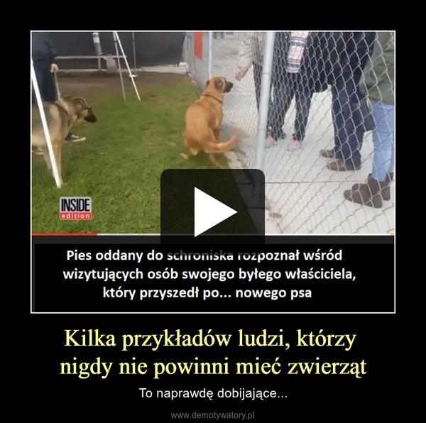 Kilka przykładów ludzi, którzy nigdy nie powinni mieć zwierząt – To naprawdę dobijające...