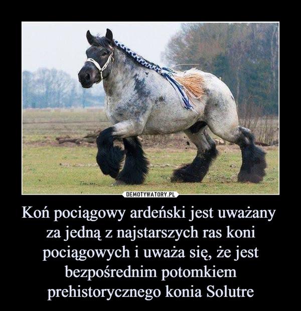 Koń pociągowy ardeński jest uważany za jedną z najstarszych ras koni pociągowych i uważa się, że jest bezpośrednim potomkiem prehistorycznego konia Solutre –