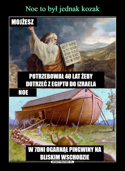 Noe to był jednak kozak