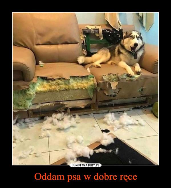 Oddam psa w dobre ręce –