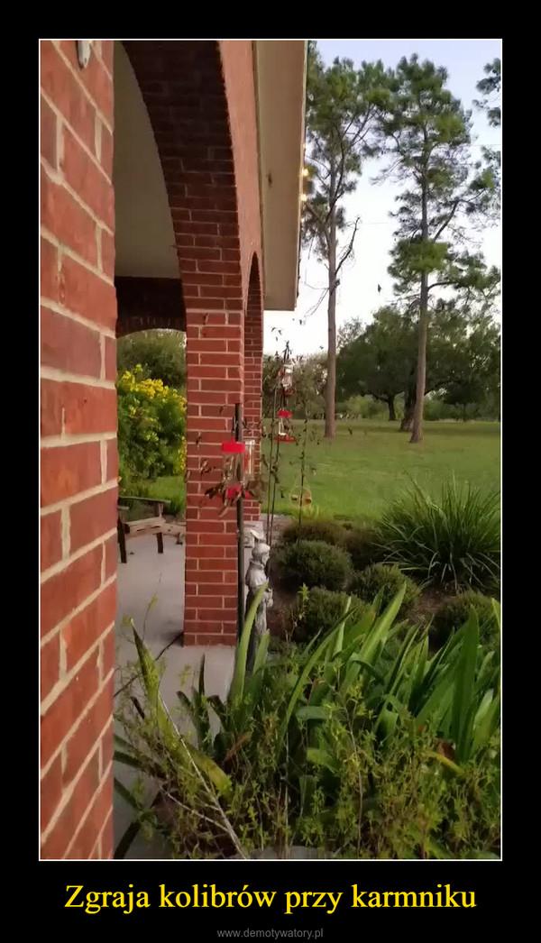 Zgraja kolibrów przy karmniku –