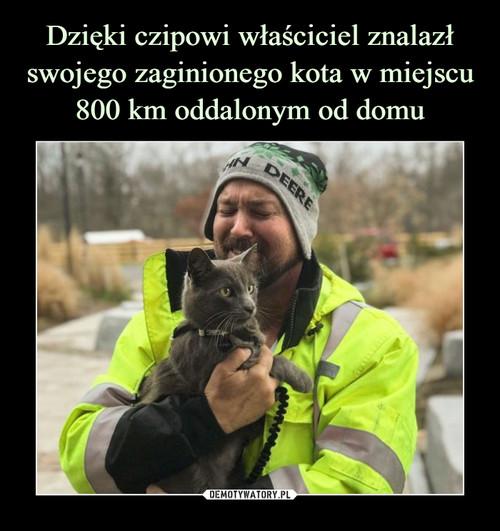 Dzięki czipowi właściciel znalazł swojego zaginionego kota w miejscu 800 km oddalonym od domu