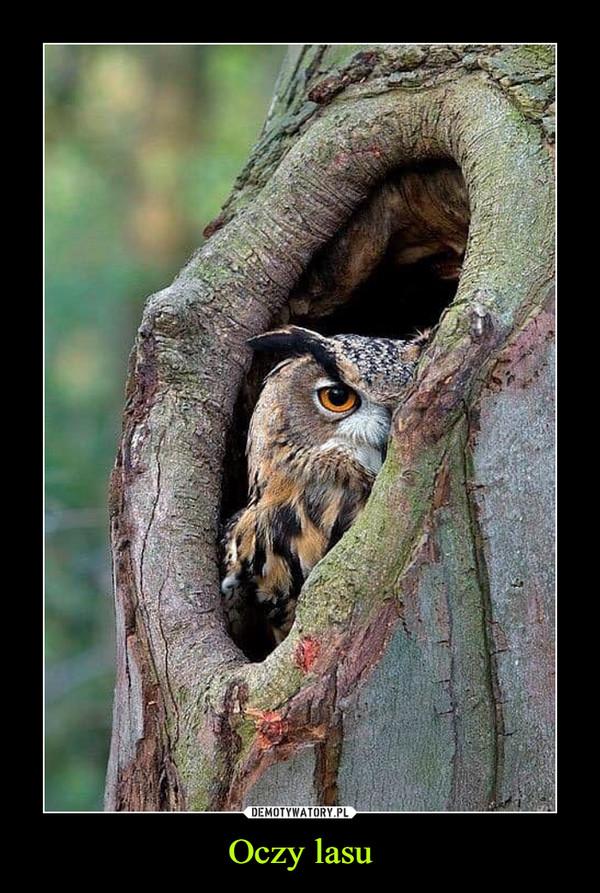 Oczy lasu –