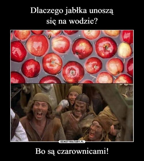 Dlaczego jabłka unoszą się na wodzie? Bo są czarownicami!