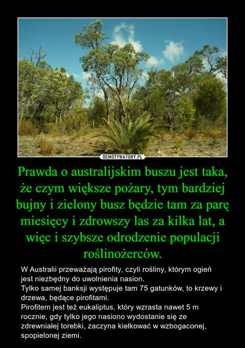 Prawda o australijskim buszu jest taka, że czym większe pożary, tym bardziej bujny i zielony busz będzie tam za parę miesięcy i zdrowszy las za kilka lat, a więc i szybsze odrodzenie populacji roślinożerców.