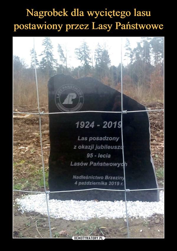 –  1924 - 2019Las posadzonyz okazji jubileuszu95-leciaLasów PaństwowychNadleśnictwo Brzeziny4 października 2019 r.