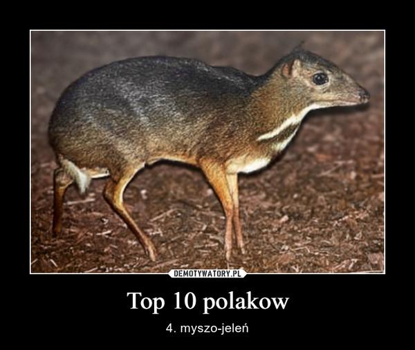 Top 10 polakow – 4. myszo-jeleń