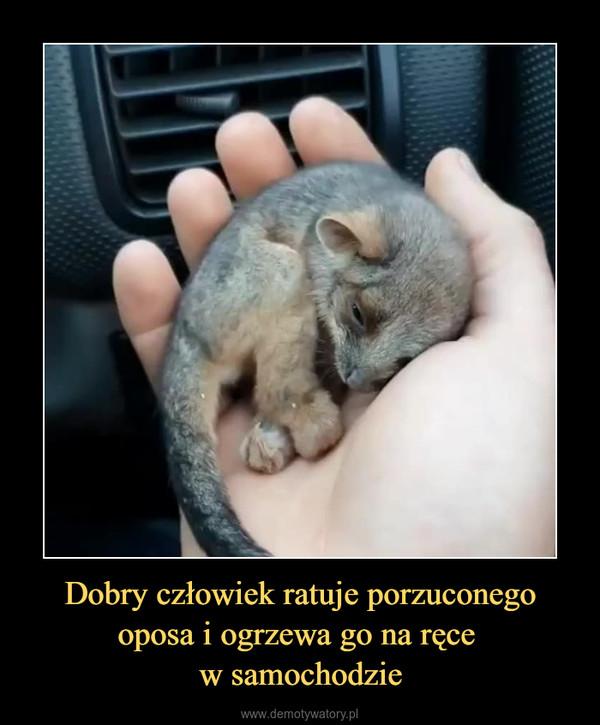 Dobry człowiek ratuje porzuconego oposa i ogrzewa go na ręce w samochodzie –