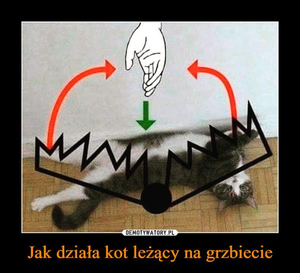 Jak działa kot leżący na grzbiecie –