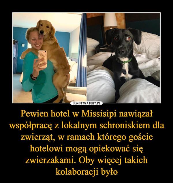 Pewien hotel w Missisipi nawiązał współpracę z lokalnym schroniskiem dla zwierząt, w ramach którego goście hotelowi mogą opiekować się zwierzakami. Oby więcej takich kolaboracji było –