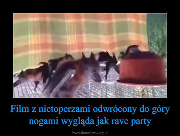 Film z nietoperzami odwrócony do góry nogami wygląda jak rave party –