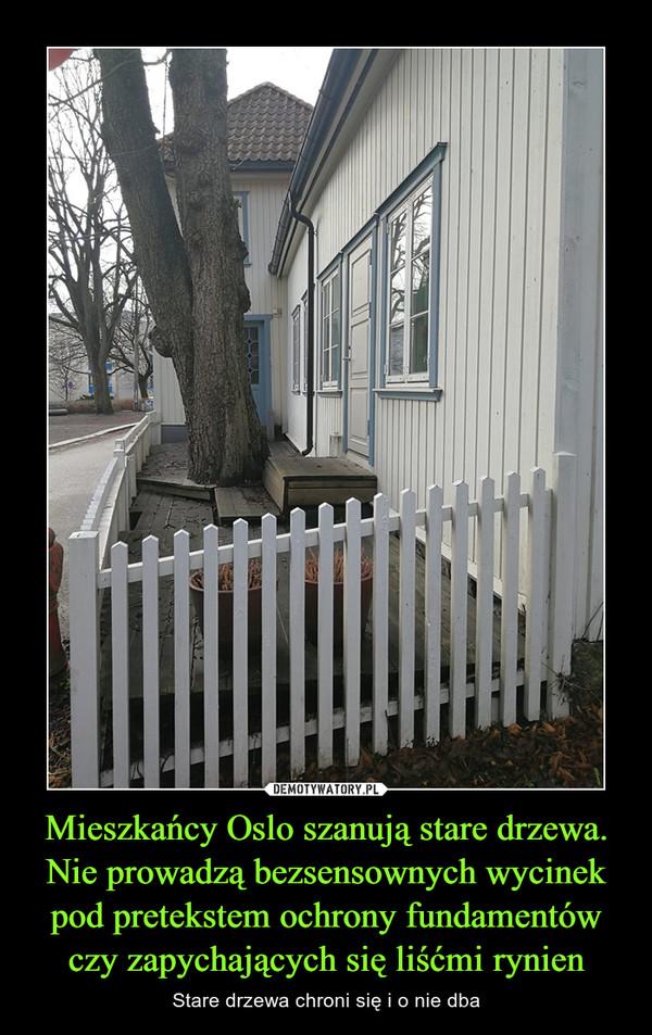 Mieszkańcy Oslo szanują stare drzewa. Nie prowadzą bezsensownych wycinek pod pretekstem ochrony fundamentów czy zapychających się liśćmi rynien – Stare drzewa chroni się i o nie dba