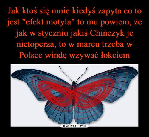 """Jak ktoś się mnie kiedyś zapyta co to jest """"efekt motyla"""" to mu powiem, że jak w styczniu jakiś Chińczyk je nietoperza, to w marcu trzeba w Polsce windę wzywać łokciem"""