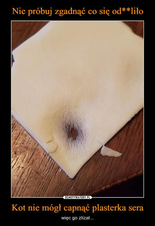Nie próbuj zgadnąć co się od**liło Kot nie mógł capnąć plasterka sera