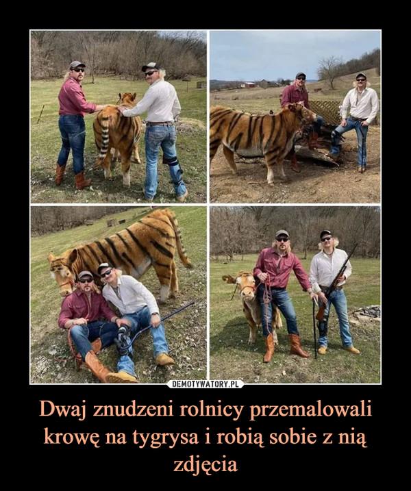 Dwaj znudzeni rolnicy przemalowali krowę na tygrysa i robią sobie z nią zdjęcia –