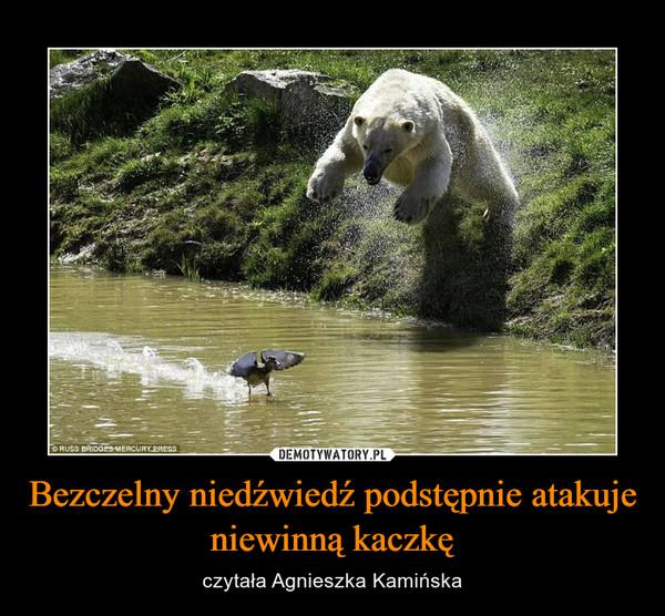 Bezczelny niedźwiedź podstępnie atakuje niewinną kaczkę – czytała Agnieszka Kamińska