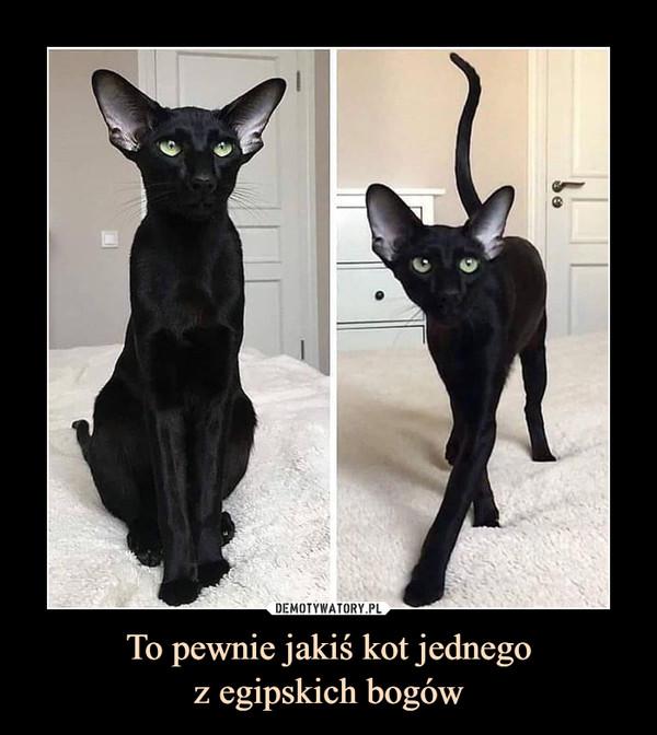 To pewnie jakiś kot jednegoz egipskich bogów –