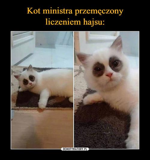 Kot ministra przemęczony liczeniem hajsu: