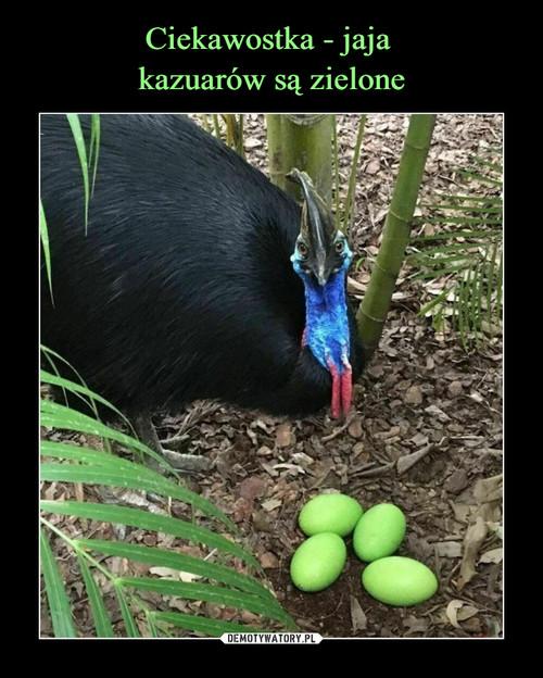 Ciekawostka - jaja  kazuarów są zielone