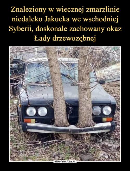 Znaleziony w wiecznej zmarzlinie niedaleko Jakucka we wschodniej Syberii, doskonale zachowany okaz Łady drzewozębnej
