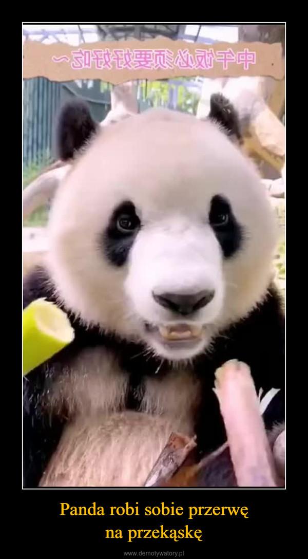 Panda robi sobie przerwęna przekąskę –