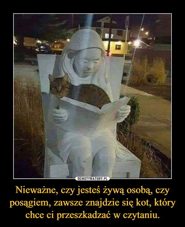 Nieważne, czy jesteś żywą osobą, czy posągiem, zawsze znajdzie się kot, który chce ci przeszkadzać w czytaniu. –
