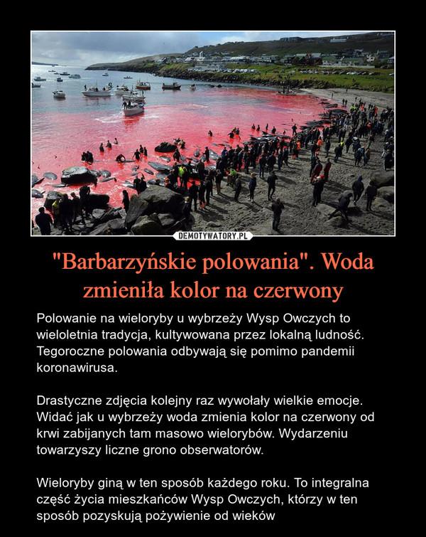 """""""Barbarzyńskie polowania"""". Woda zmieniła kolor na czerwony – Polowanie na wieloryby u wybrzeży Wysp Owczych to wieloletnia tradycja, kultywowana przez lokalną ludność. Tegoroczne polowania odbywają się pomimo pandemii koronawirusa.Drastyczne zdjęcia kolejny raz wywołały wielkie emocje. Widać jak u wybrzeży woda zmienia kolor na czerwony od krwi zabijanych tam masowo wielorybów. Wydarzeniu towarzyszy liczne grono obserwatorów.Wieloryby giną w ten sposób każdego roku. To integralna część życia mieszkańców Wysp Owczych, którzy w ten sposób pozyskują pożywienie od wieków Polowanie na wieloryby u wybrzeży Wysp Owczych to wieloletnia tradycja, kultywowana przez lokalną ludność. Tegoroczne polowania odbywają się pomimo pandemii koronawirusa.Drastyczne zdjęcia kolejny raz wywołały wielkie emocje. Widać jak u wybrzeży woda zmienia kolor na czerwony od krwi zabijanych tam masowo wielorybów. Wydarzeniu towarzyszy liczne grono obserwatorów.Wieloryby giną w ten sposób każdego roku. To integralna część życia mieszkańców Wysp Owczych, którzy w ten sposób pozyskują pożywienie od wieków"""