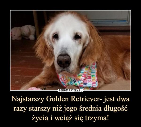 Najstarszy Golden Retriever- jest dwa razy starszy niż jego średnia długość życia i wciąż się trzyma! –