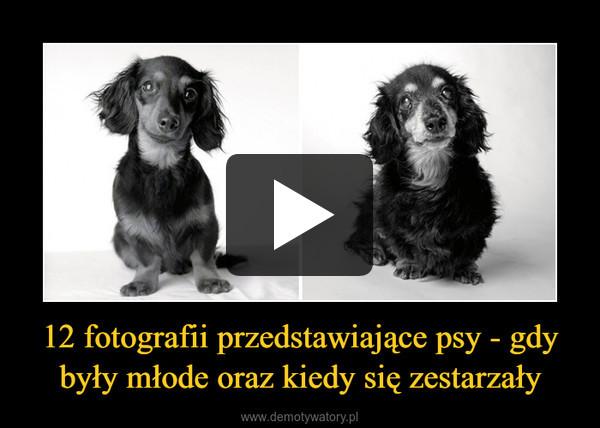 12 fotografii przedstawiające psy - gdy były młode oraz kiedy się zestarzały –