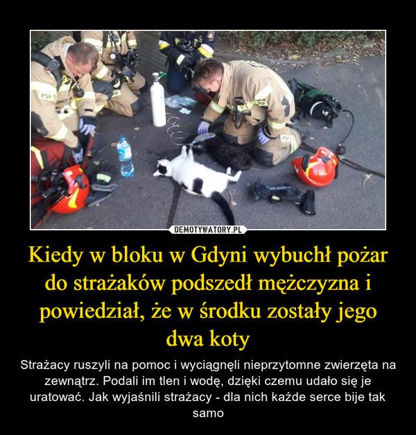 Kiedy w bloku w Gdyni wybuchł pożar do strażaków podszedł mężczyzna i powiedział, że w środku zostały jego dwa koty – Strażacy ruszyli na pomoc i wyciągnęli nieprzytomne zwierzęta na zewnątrz. Podali im tlen i wodę, dzięki czemu udało się je uratować. Jak wyjaśnili strażacy - dla nich każde serce bije tak samo