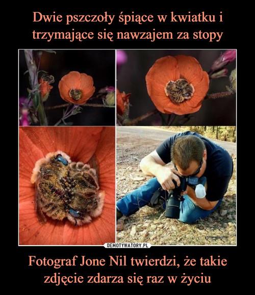 Dwie pszczoły śpiące w kwiatku i trzymające się nawzajem za stopy Fotograf Jone Nil twierdzi, że takie zdjęcie zdarza się raz w życiu