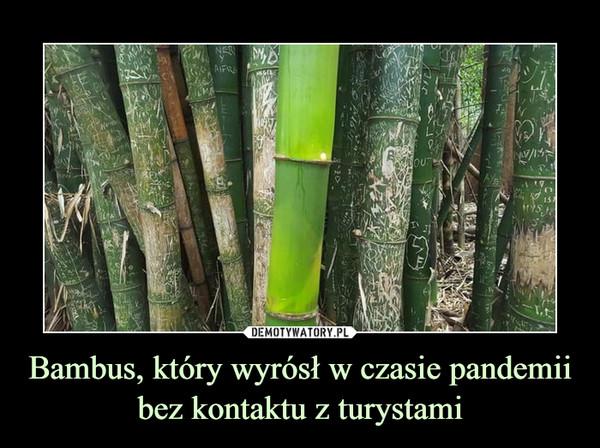 Bambus, który wyrósł w czasie pandemii bez kontaktu z turystami –