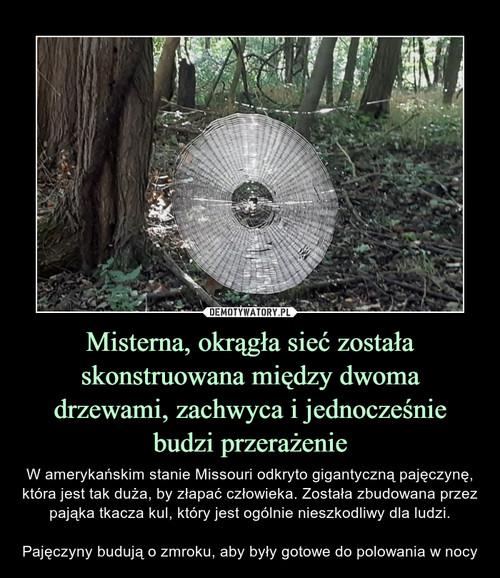Misterna, okrągła sieć została skonstruowana między dwoma drzewami, zachwyca i jednocześnie budzi przerażenie