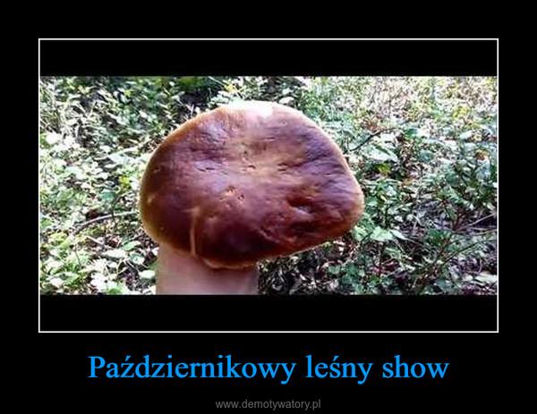 Październikowy leśny show –