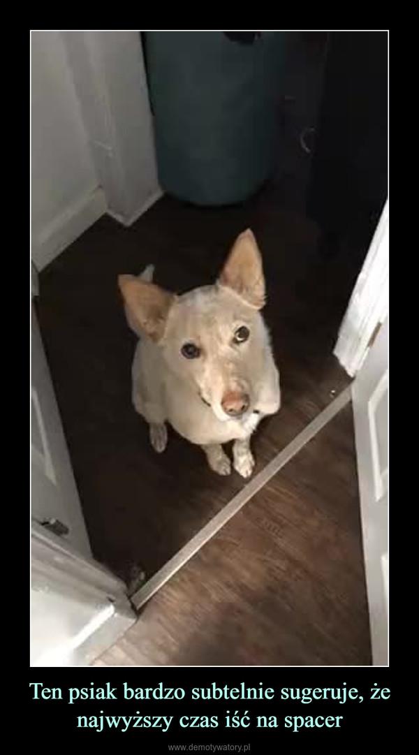 Ten psiak bardzo subtelnie sugeruje, że najwyższy czas iść na spacer –