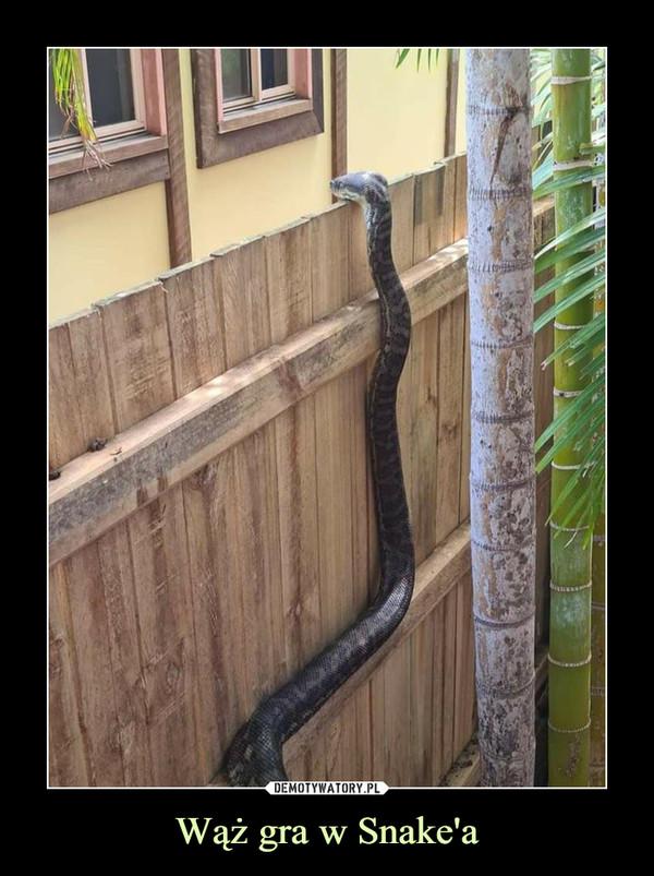 Wąż gra w Snake'a –