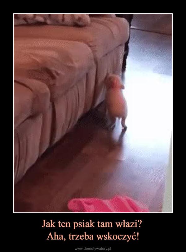 Jak ten psiak tam włazi? Aha, trzeba wskoczyć! –