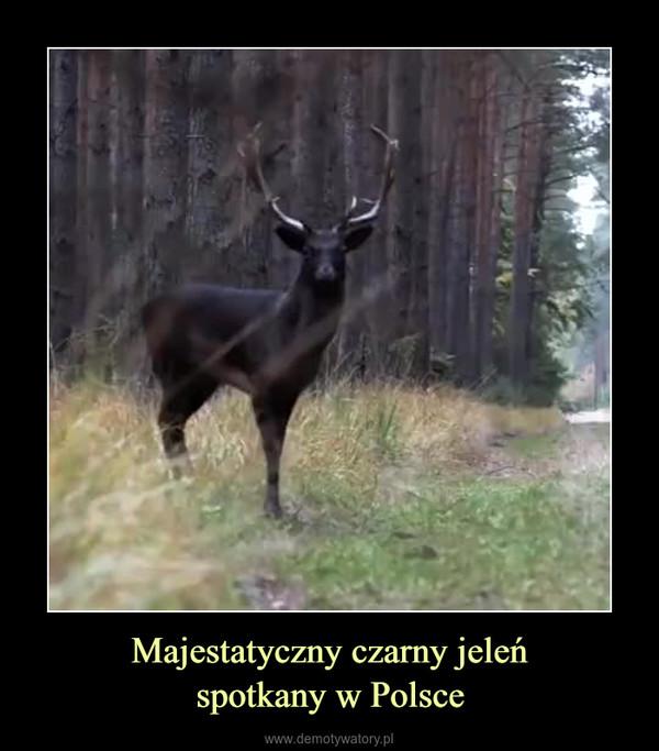 Majestatyczny czarny jeleńspotkany w Polsce –