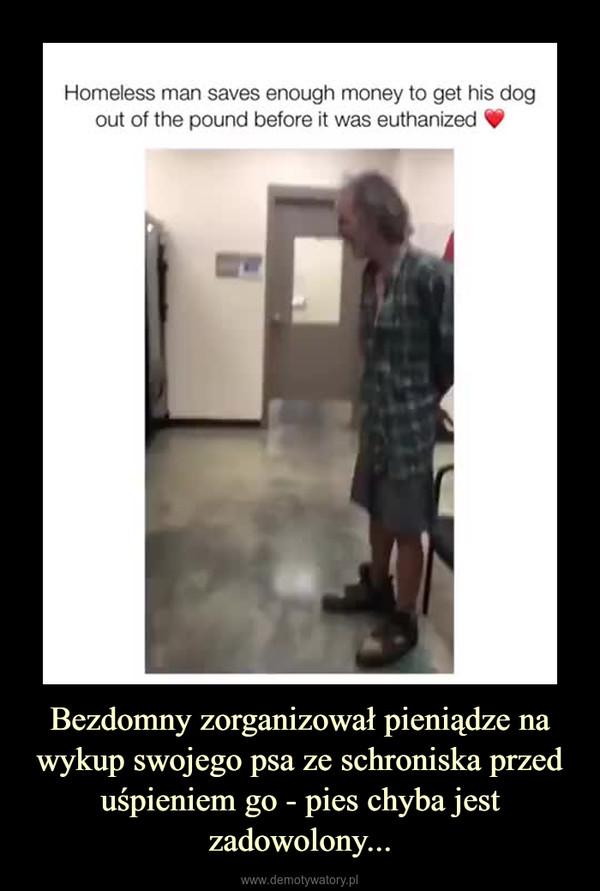 Bezdomny zorganizował pieniądze na wykup swojego psa ze schroniska przed uśpieniem go - pies chyba jest zadowolony... –