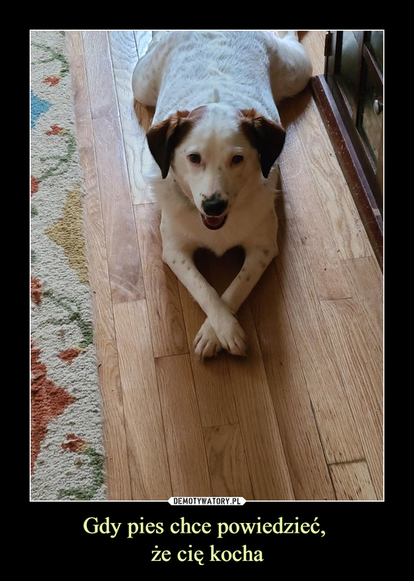 Gdy pies chce powiedzieć, że cię kocha –