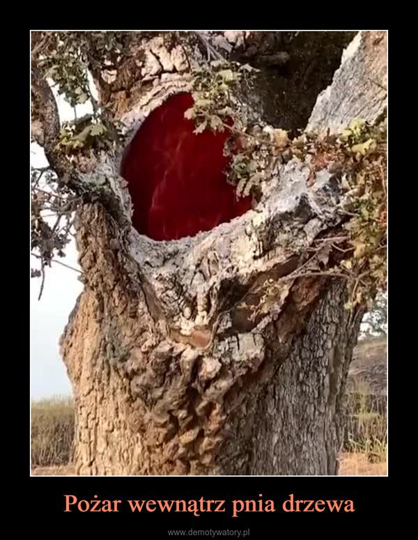 Pożar wewnątrz pnia drzewa –